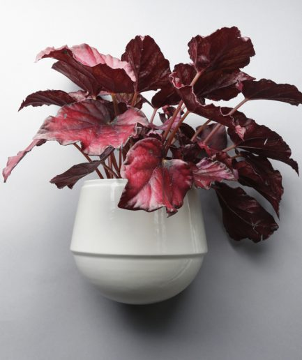 Babylon wandbloempot wit met plant, ontwerp Fenna Oosterhoff