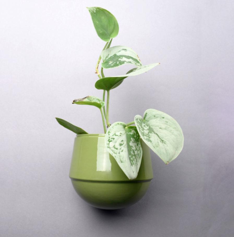 Groene wandbloempot Little Babylon, ontwerp van Fenna Oosterhoff